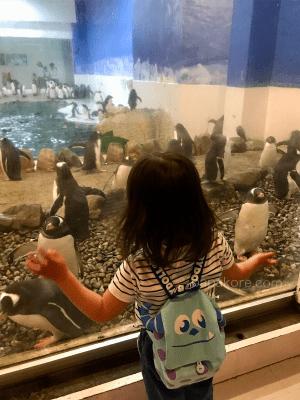 ペンギン王国